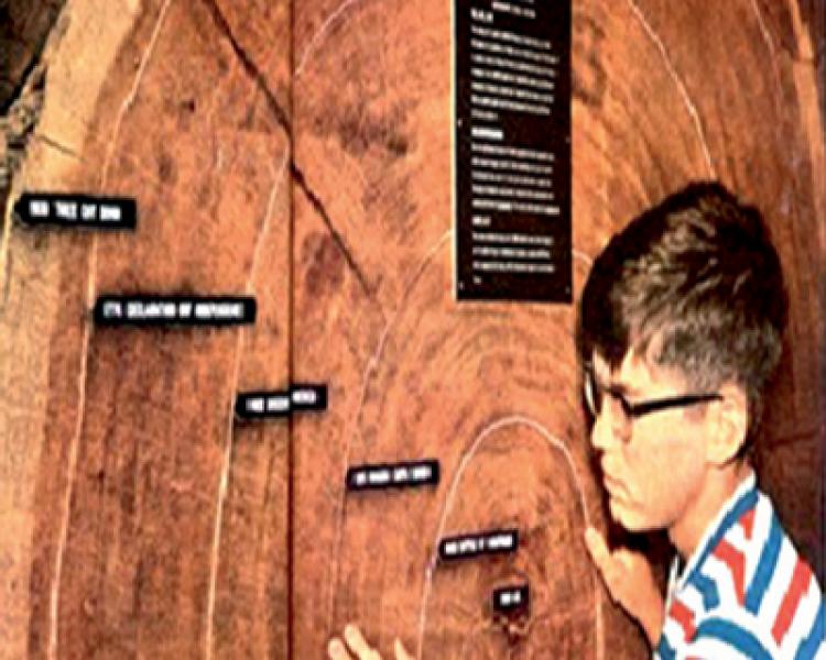 Bilimsel Çalışmalara Katkı Yönü İle Anıt Ağaçlar (12)